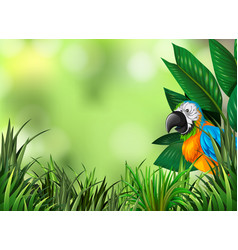 Parrot on the green nature background vector