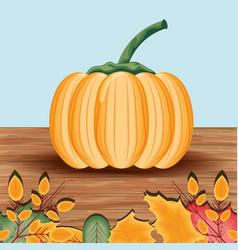 pumpkin for thanksgiving day in wood table vector image