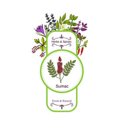 vintage herbs and spices label collection sumac vector image