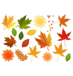 big set of realistic leaves and flowers vector image vector image