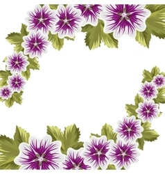 Beautiful mallow flowers with leaves vector