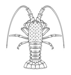 crab prawns lobster crawfish coloring page vector image