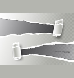 Realistic ripped paper torn stripe and paper curl vector