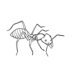sketch of the ant vector image