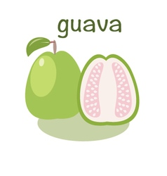 Guava icon in flat style Isolated objec vector image