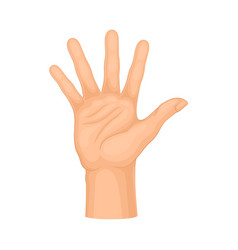 Detailed palm hand gesture isolated on vector