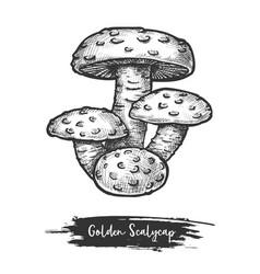 Golden scalycap or flame scalecap mushroom vector