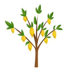 lemon tree with yellow green lemons flowers and vector image