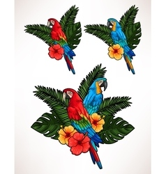 Macaw and palm leaves vector