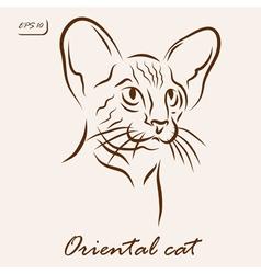 Oriental cat vector