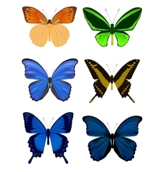 Set of Butterfly isolated on white vector