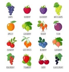 Set of flat berries vector image