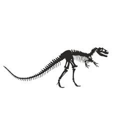 Skeleton of dinosaur vector