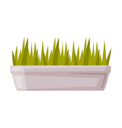 Sprouts or seedlings potted in white container vector