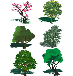 the set of trees in the vector image vector image