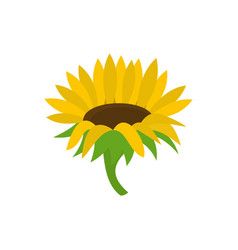 blossoming sunflower icon flat style vector image