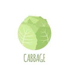 Cabbage icon in flat style on white background vector