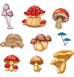 Cartoon of mushroom collection vector