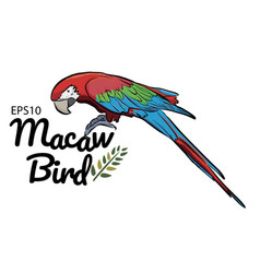 colorful drawing macaw bird pattern background vector image