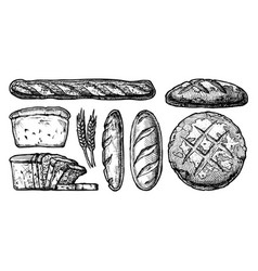 set different breads vector image