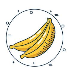 banana fresh fruit handmade drawn vector image