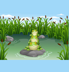cartoon frog stacked in the pond vector image