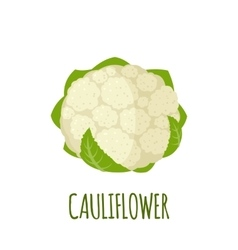Cauliflower icon in flat style on white background vector image
