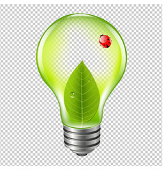 eco bulb with ladybug vector image