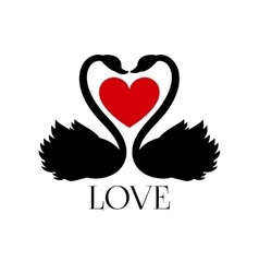 Two loving swans with heart on white background vector image vector image