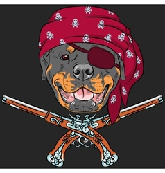 Dog Rottweiler Pirate with pistols vector image vector image