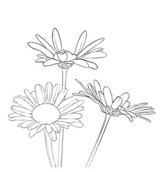 Drawing daisy flowers vector