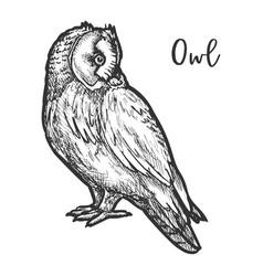 hand drawn burrowing owl or bird sketch vector image