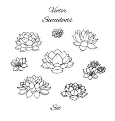 Hand drawn succulents contours set isolated vector
