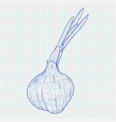 Onion hand drawn sketch on notebook sheet vector