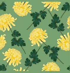 Yellow chrysanthemum flower on green olive vector