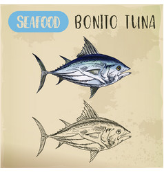 bonito tuna or sardini tribe fish mackerel sketch vector image