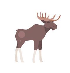 cartoon moose vector image