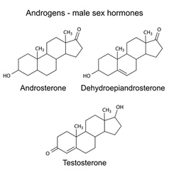 Chemical formulas of male sex hormones vector image
