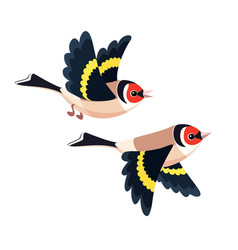 Flying european goldfinch pair isolated vector