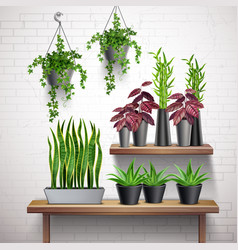 House plants realistic interior vector