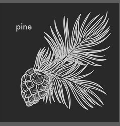 Pine cone with needle leaves hand drawn sketch vector