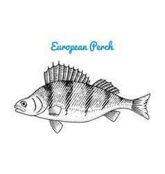 river and lake fish european sea creatures vector image