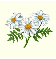 Daisy hand drawn painted vector