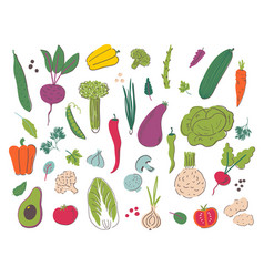 Vegetables hand draw set vector