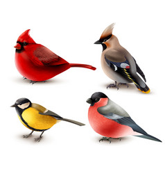 Winter birds set vector