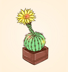 blooming yellow cactus vector image vector image