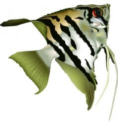 Angelfish scalare vector