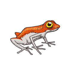 cute orange frog tropical amphibian wild animal vector image