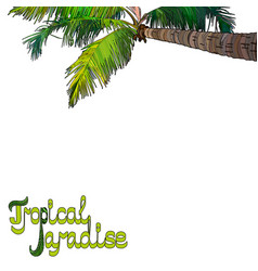 palm tree background vector image