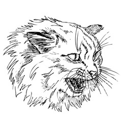 angry cat vector image